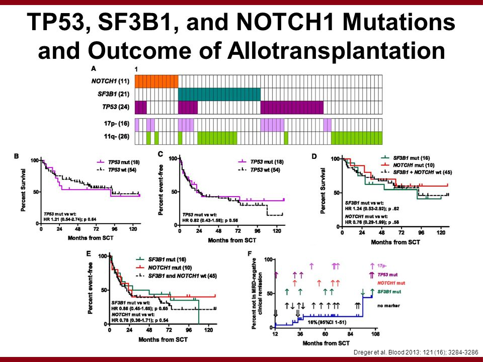 TP53, SF3B1, and NOTCH1 Mutations and Outcome of Allotransplantation Dreger et al.