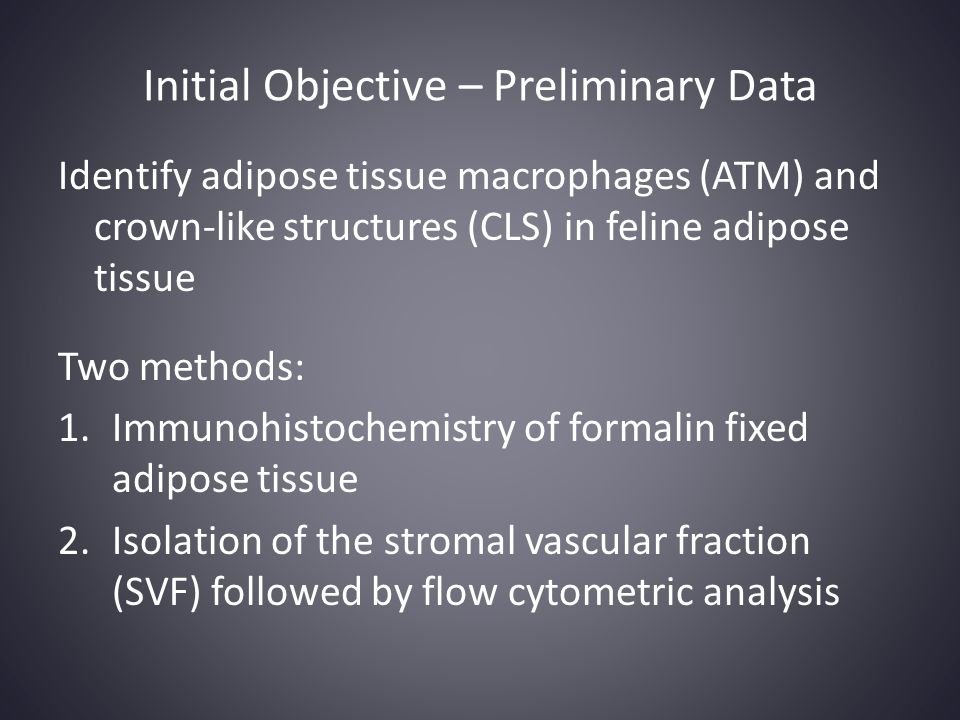 Initial Objective – Preliminary Data Identify adipose tissue macrophages (ATM) and crown-like structures (CLS) in feline adipose tissue Two methods: 1