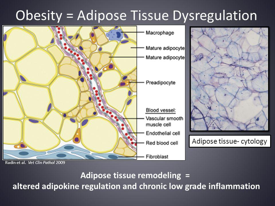 Obesity = Adipose Tissue Dysregulation Radin et al. Vet Clin Pathol 2009 Adipose tissue remodeling = altered adipokine regulation and chronic low grad