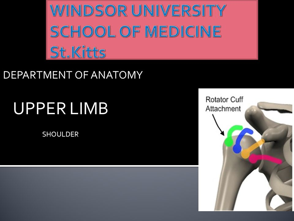  The shoulder is the region of upper limb attachment to the trunk and neck.