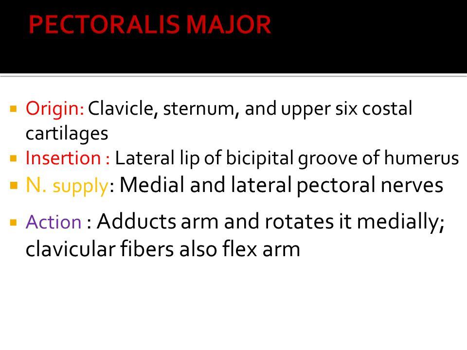 ▪ 1-Radial nerve ▪ 2-Profunda brachii artery