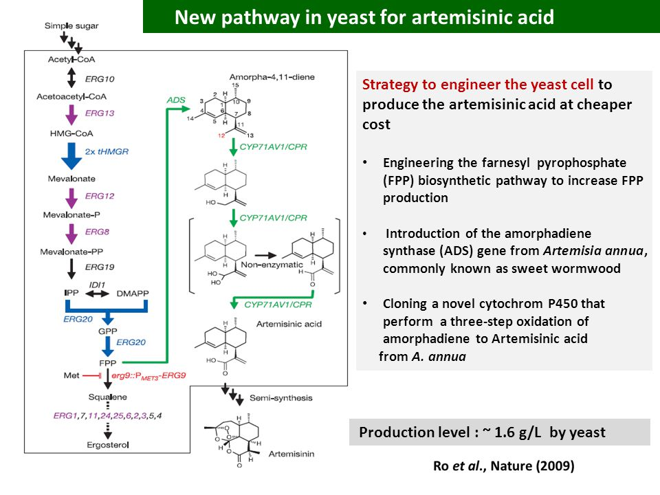 Strategy to engineer the yeast cell to produce the artemisinic acid at cheaper cost Engineering the farnesyl pyrophosphate (FPP) biosynthetic pathway to increase FPP production Introduction of the amorphadiene synthase (ADS) gene from Artemisia annua, commonly known as sweet wormwood Cloning a novel cytochrom P450 that perform a three-step oxidation of amorphadiene to Artemisinic acid from A.
