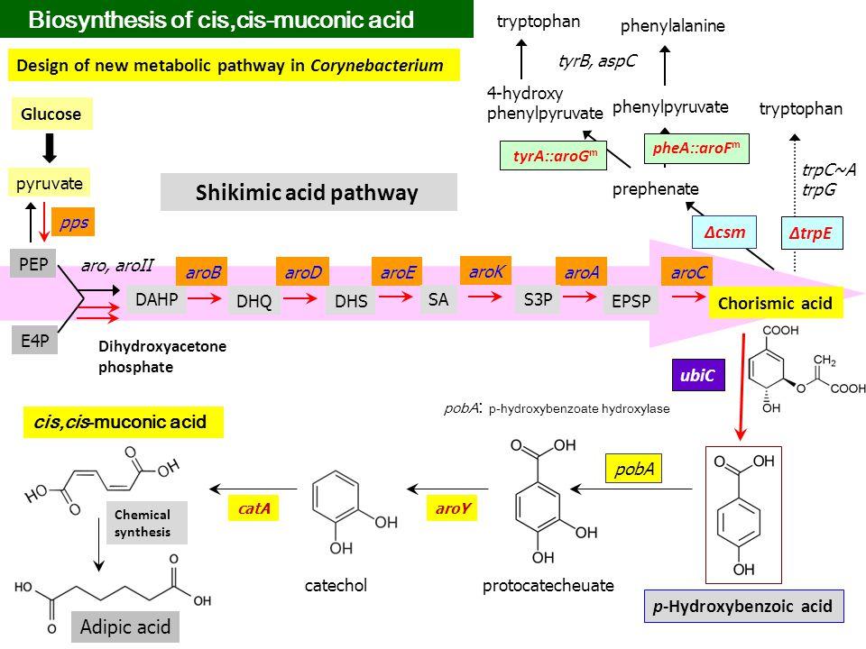 PEP E4P DAHP Chorismic acid DHQ aro, aroII aroBaroDaroE aroK aroAaroC DHS SAS3P EPSP p-Hydroxybenzoic acid tryptophan prephenate phenylpyruvate 4-hydr