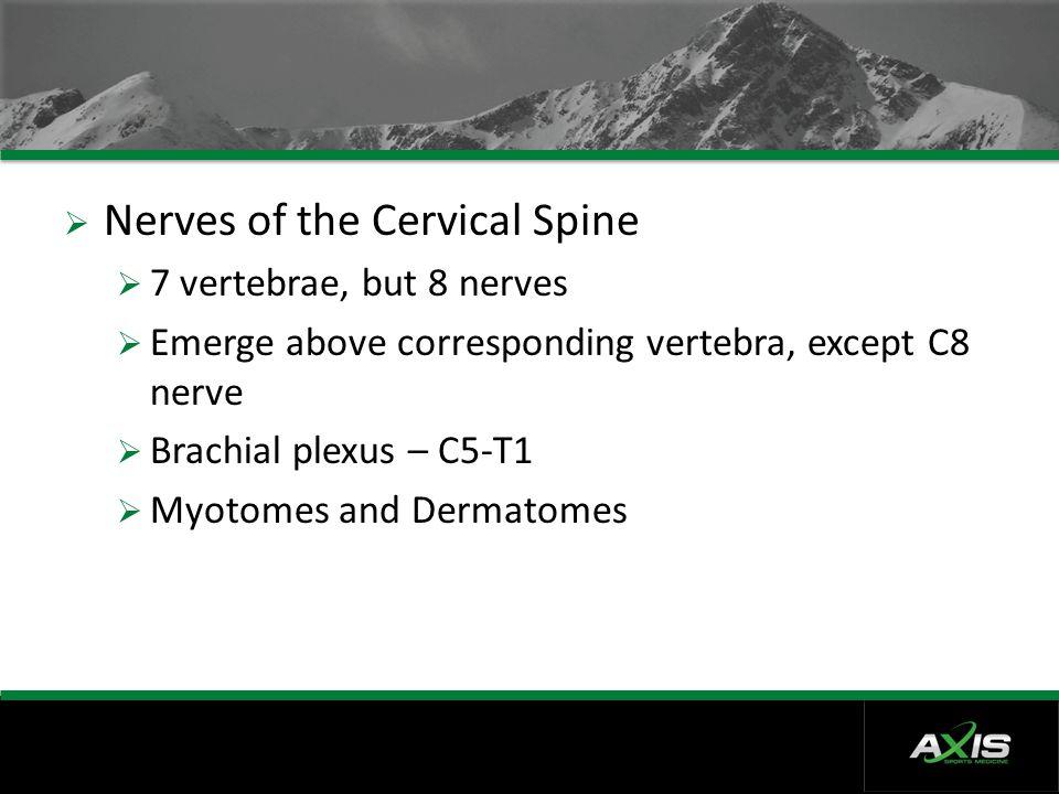  Nerves of the Cervical Spine  7 vertebrae, but 8 nerves  Emerge above corresponding vertebra, except C8 nerve  Brachial plexus – C5-T1  Myotomes