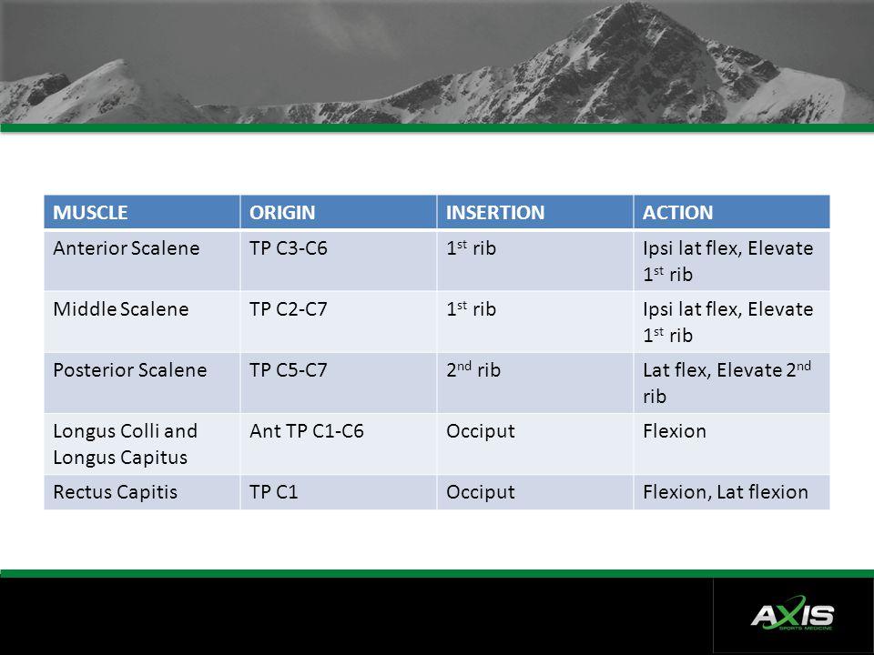MUSCLEORIGININSERTIONACTION Anterior ScaleneTP C3-C61 st ribIpsi lat flex, Elevate 1 st rib Middle ScaleneTP C2-C71 st ribIpsi lat flex, Elevate 1 st