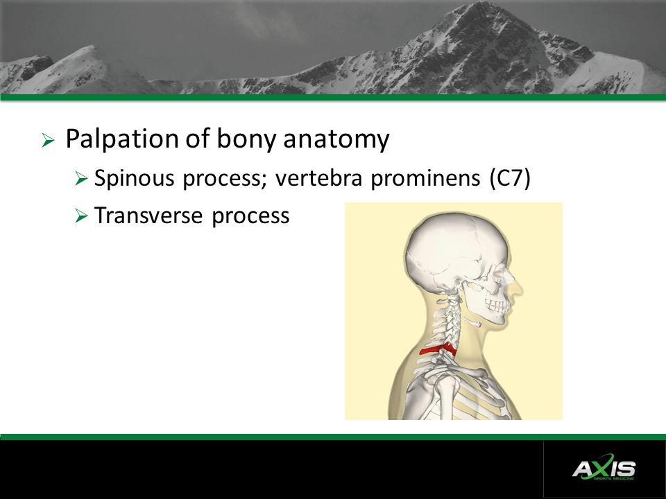  Palpation of bony anatomy  Spinous process; vertebra prominens (C7)  Transverse process