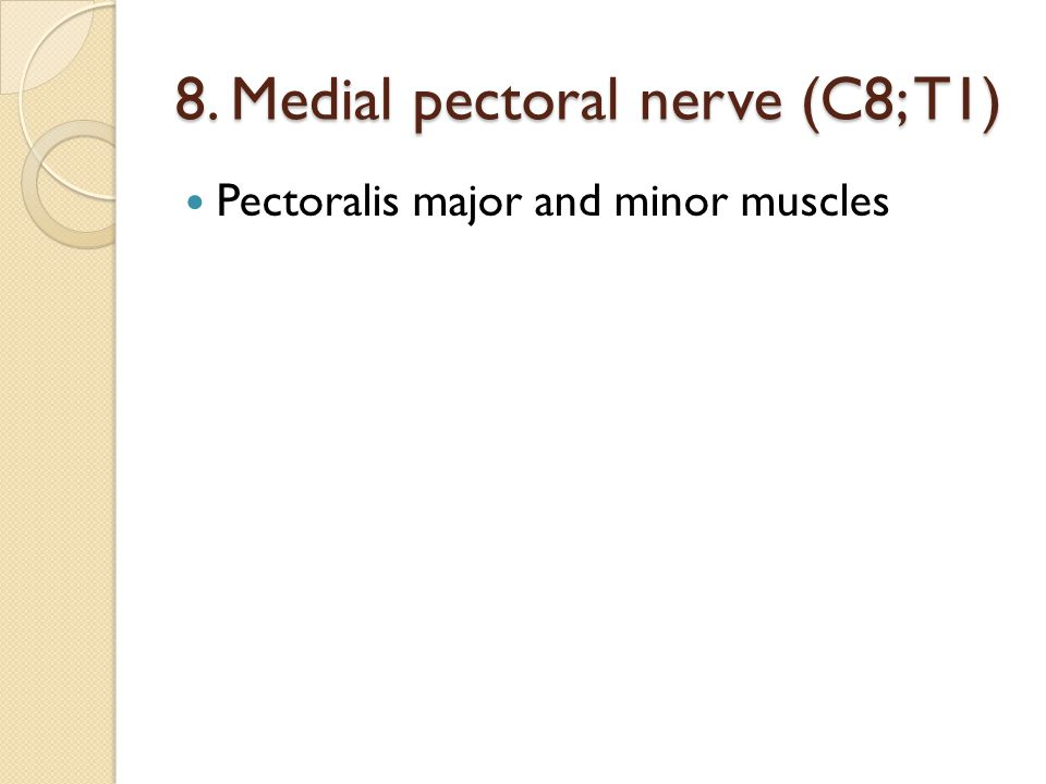 8. Medial pectoral nerve (C8; T1) Pectoralis major and minor muscles