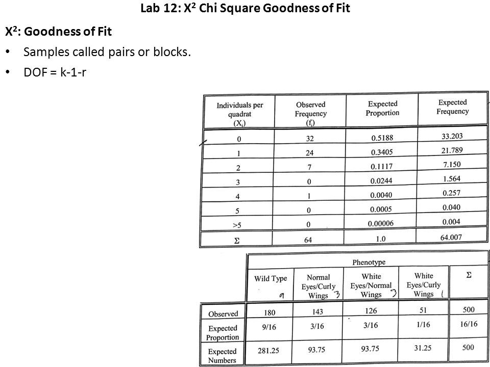Lab 12: X 2 Chi Square Goodness of Fit X 2 : Goodness of Fit Samples called pairs or blocks.