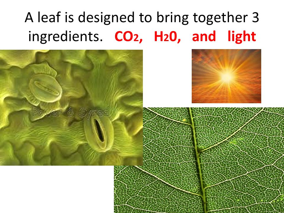 A leaf is designed to bring together 3 ingredients. CO 2, H 2 0, and light co