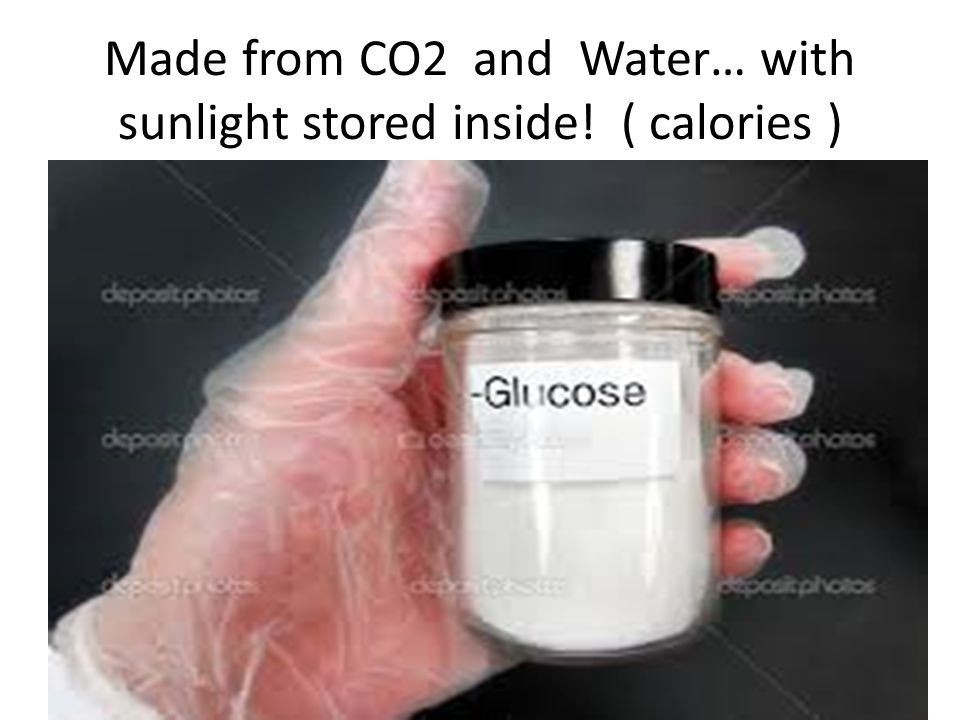 Made from CO2 and Water… with sunlight stored inside! ( calories )