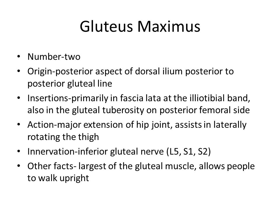 Number-two Origin-posterior aspect of dorsal ilium posterior to posterior gluteal line Insertions-primarily in fascia lata at the illiotibial band, al