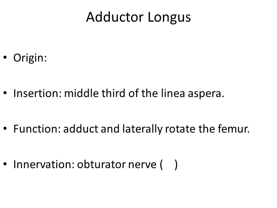 Adductor Longus Origin: Insertion: middle third of the linea aspera. Function: adduct and laterally rotate the femur. Innervation: obturator nerve ( )