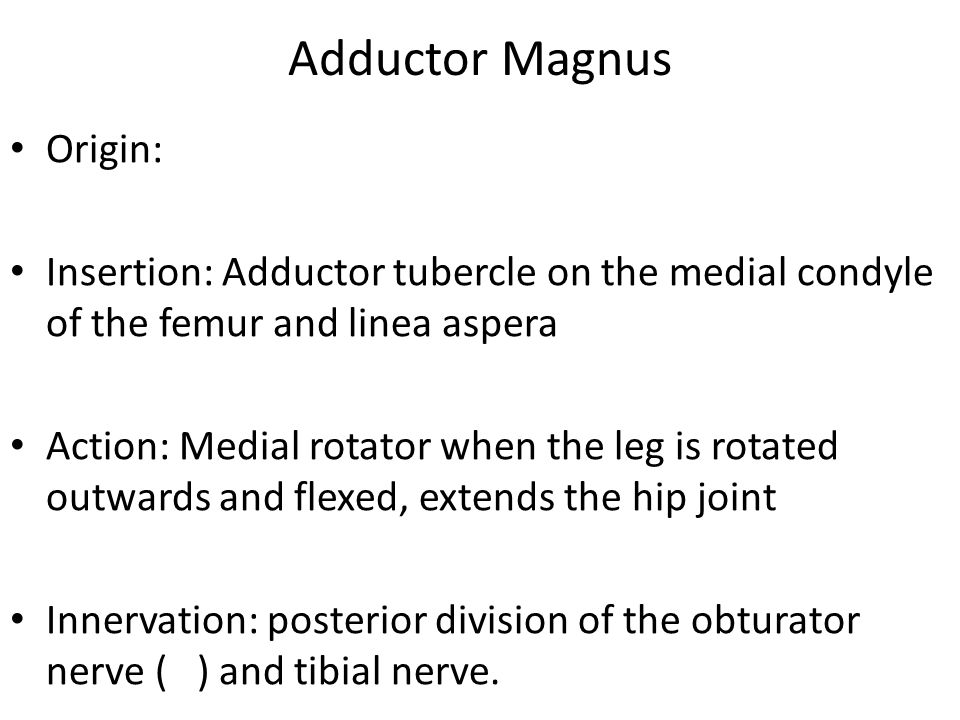 Adductor Magnus Origin: Insertion: Adductor tubercle on the medial condyle of the femur and linea aspera Action: Medial rotator when the leg is rotate