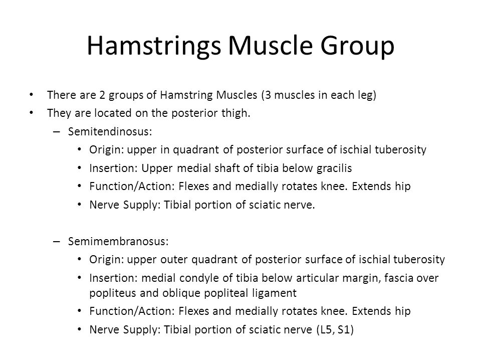 Hamstrings Muscle Group There are 2 groups of Hamstring Muscles (3 muscles in each leg) They are located on the posterior thigh. – Semitendinosus: Ori