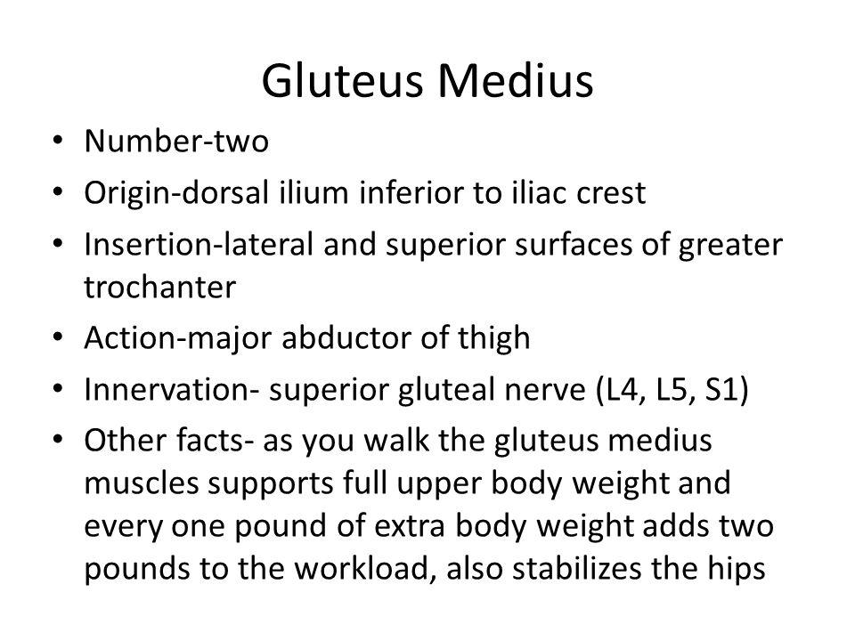 Sartorius Origin: anterior superior iliac spine Insertion: Function: Innervation: