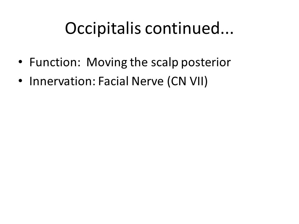 Occipitalis continued... Function: Moving the scalp posterior Innervation: Facial Nerve (CN VII)