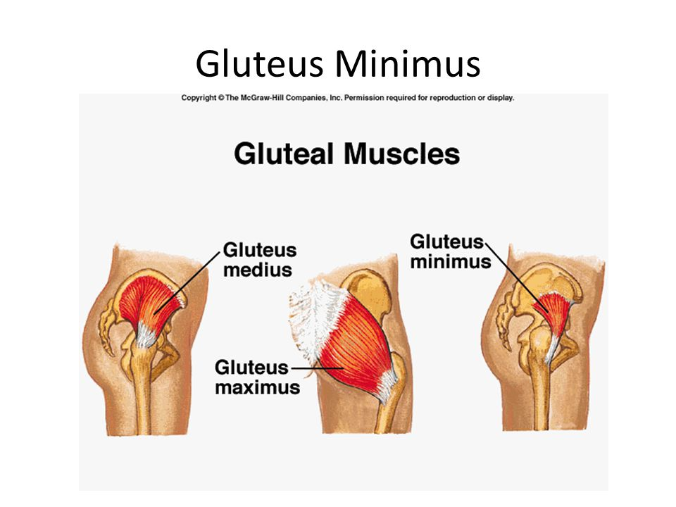 Quadriceps Muscle Group 2 groups of Quadricep Muscles ( 4 muscles in each leg) They cover the front and sides of the thigh.