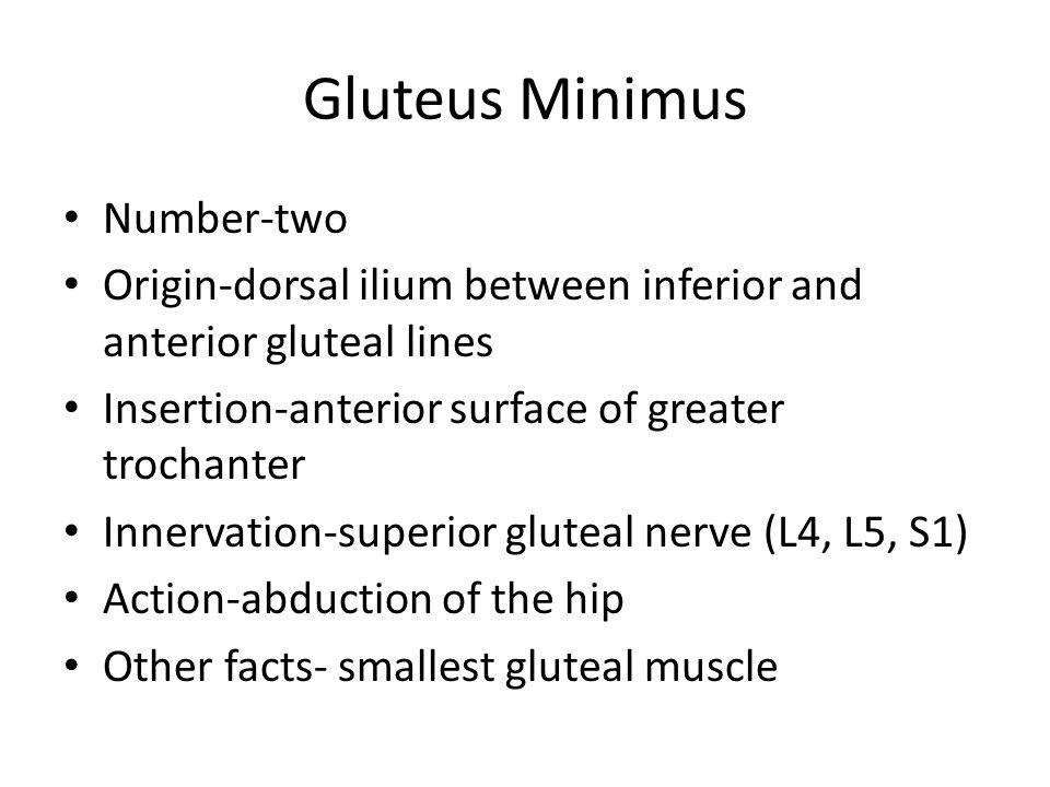 Quadriceps continued...– Vastus Intermedius: Origin: Anterior and lateral shaft of femur.