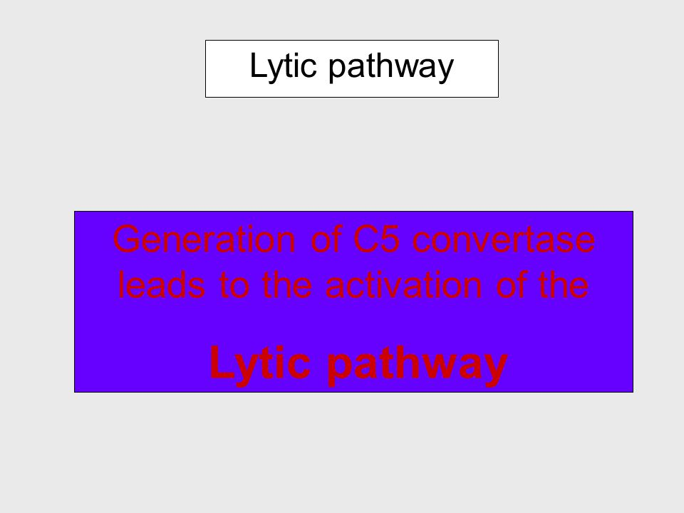 C5-convertase of the two pathways C3b BbBb C5-convertase of the Alternative Pathway C4b C2a C3b C5-convertase of the Classical and lectin Pathways