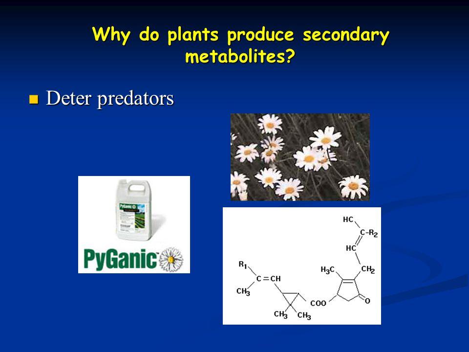 Why do plants produce secondary metabolites? Deter predators Deter predators