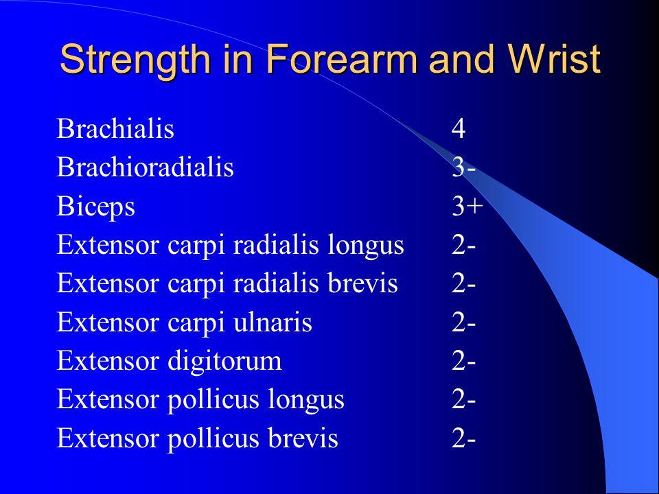 Strength in Forearm and Wrist Brachialis4 Brachioradialis3- Biceps3+ Extensor carpi radialis longus 2- Extensor carpi radialis brevis 2- Extensor carpi ulnaris 2- Extensor digitorum2- Extensor pollicus longus2- Extensor pollicus brevis2-