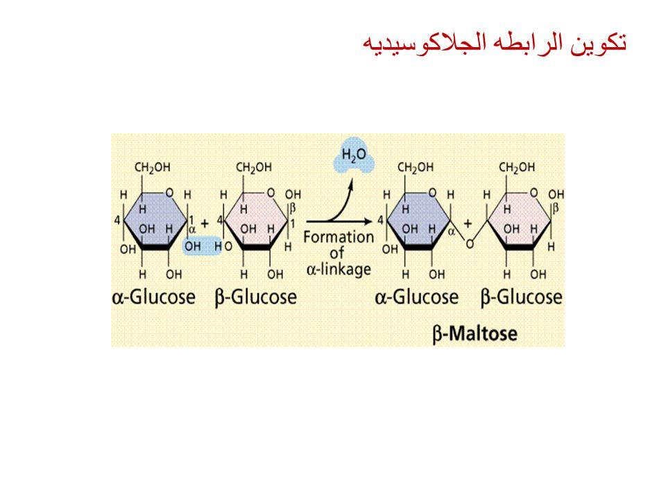 تكوين الرابطه الجلاكوسيديه