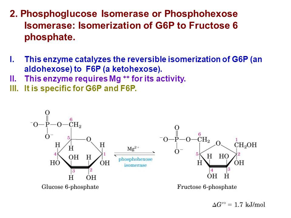 2. Phosphoglucose Isomerase or Phosphohexose Isomerase: Isomerization of G6P to Fructose 6 phosphate. I.This enzyme catalyzes the reversible isomeriza