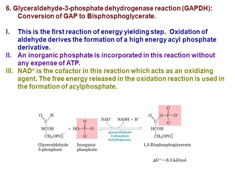 6. Glyceraldehyde-3-phosphate dehydrogenase reaction (GAPDH): Conversion of GAP to Bisphosphoglycerate. I.This is the first reaction of energy yieldin