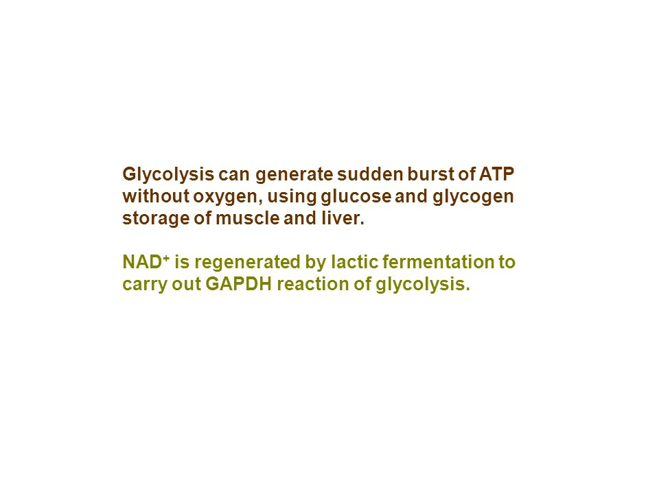 Glycolysis can generate sudden burst of ATP without oxygen, using glucose and glycogen storage of muscle and liver. NAD + is regenerated by lactic fer
