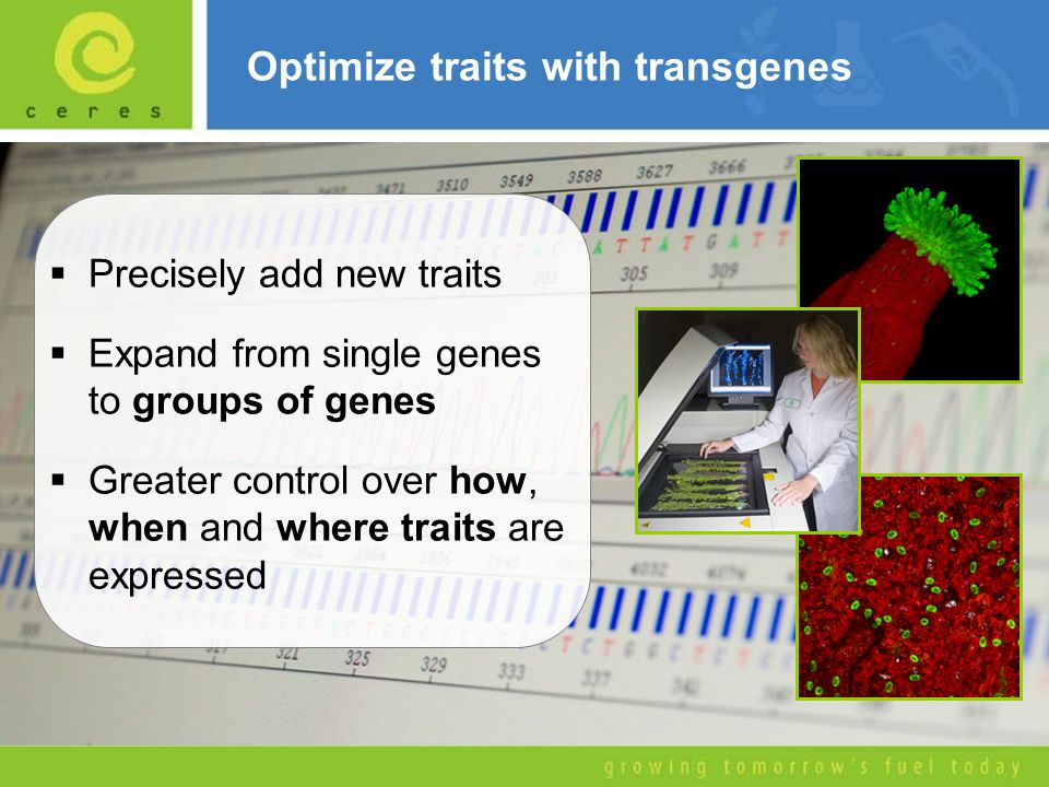 Optimize traits with transgenes  Precisely add new traits  Expand from single genes to groups of genes  Greater control over how, when and where tr