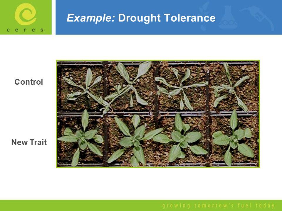 Example: Drought Tolerance Control New Trait