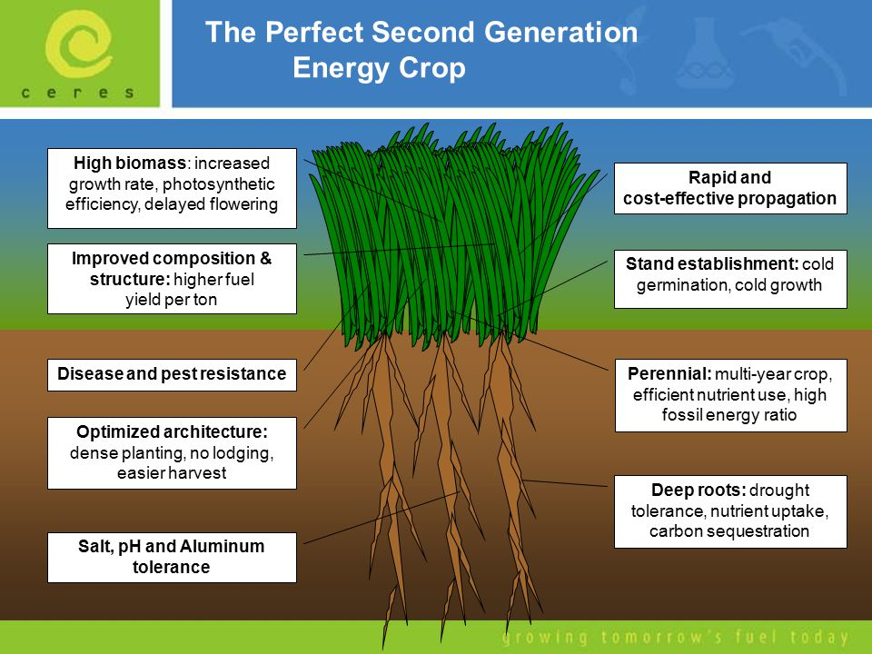 Ceres Energy Crops Miscanthus Energycane SorghumSwitchgrass