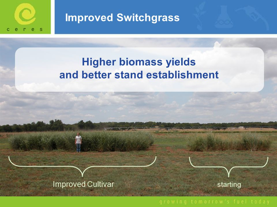 Improved Switchgrass starting Improved Cultivar Higher biomass yields and better stand establishment