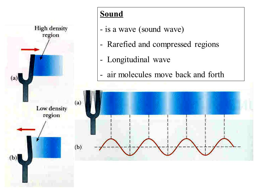 You play an open organ pipe with a length of 1m.What is the fundamental frequency.
