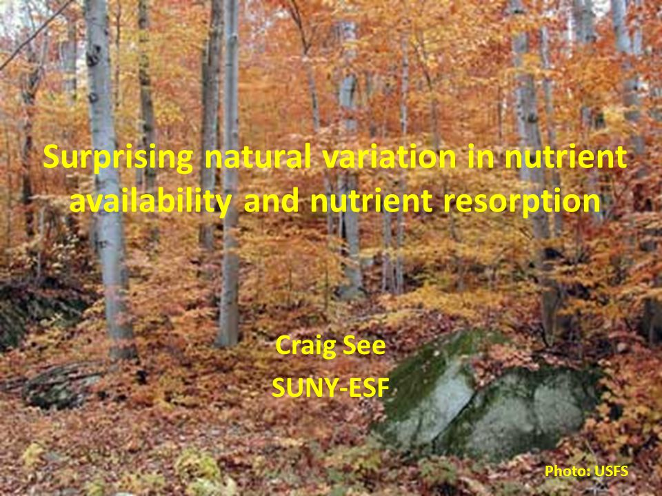 Surprising natural variation in nutrient availability and nutrient resorption Craig See SUNY-ESF Photo: USFS
