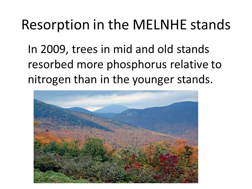 Resorption in the MELNHE stands In 2009, trees in mid and old stands resorbed more phosphorus relative to nitrogen than in the younger stands.
