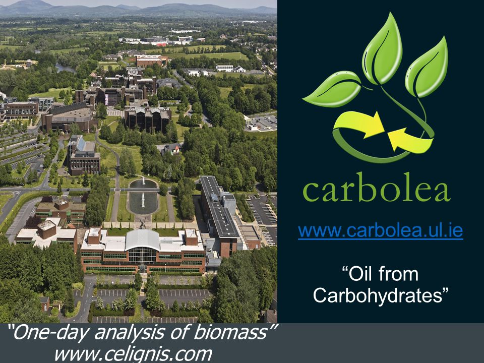 Carbolea Research Group Focused on the non-biological methods for obtaining value from biomass.