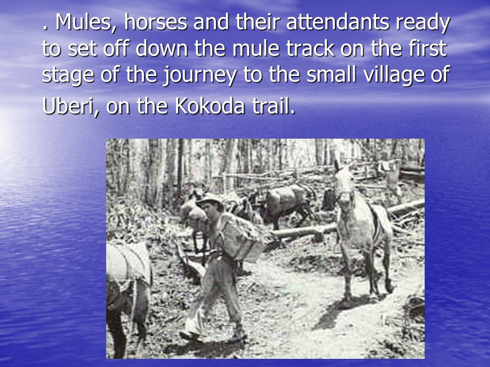 . Mules, horses and their attendants ready to set off down the mule track on the first stage of the journey to the small village of Uberi, on the Kokoda trail.