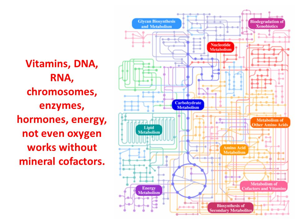 Vitamins, DNA, RNA, chromosomes, enzymes, hormones, energy, not even oxygen works without mineral cofactors.