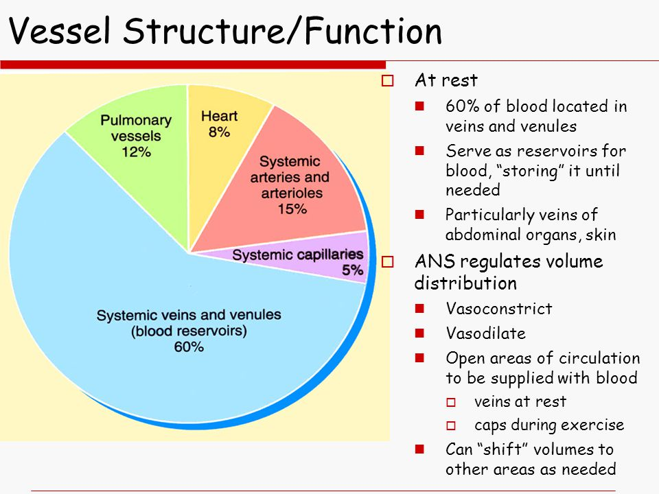 Vessel Structure/Function  At rest 60% of blood located in veins and venules Serve as reservoirs for blood, storing it until needed Particularly veins of abdominal organs, skin  ANS regulates volume distribution Vasoconstrict Vasodilate Open areas of circulation to be supplied with blood  veins at rest  caps during exercise Can shift volumes to other areas as needed