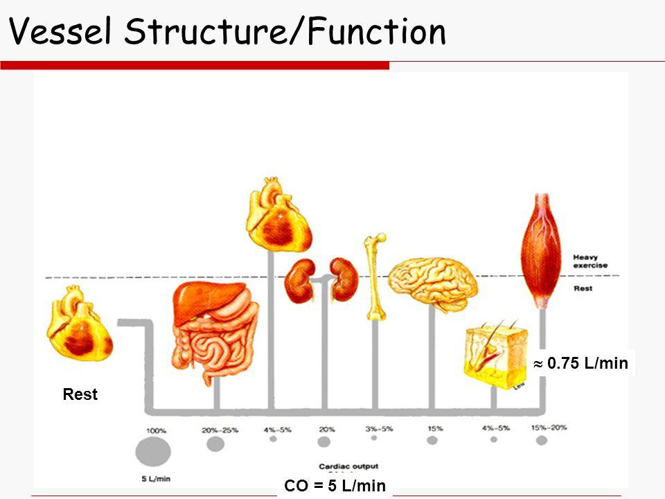 Vessel Structure/Function Rest CO = 5 L/min  0.75 L/min