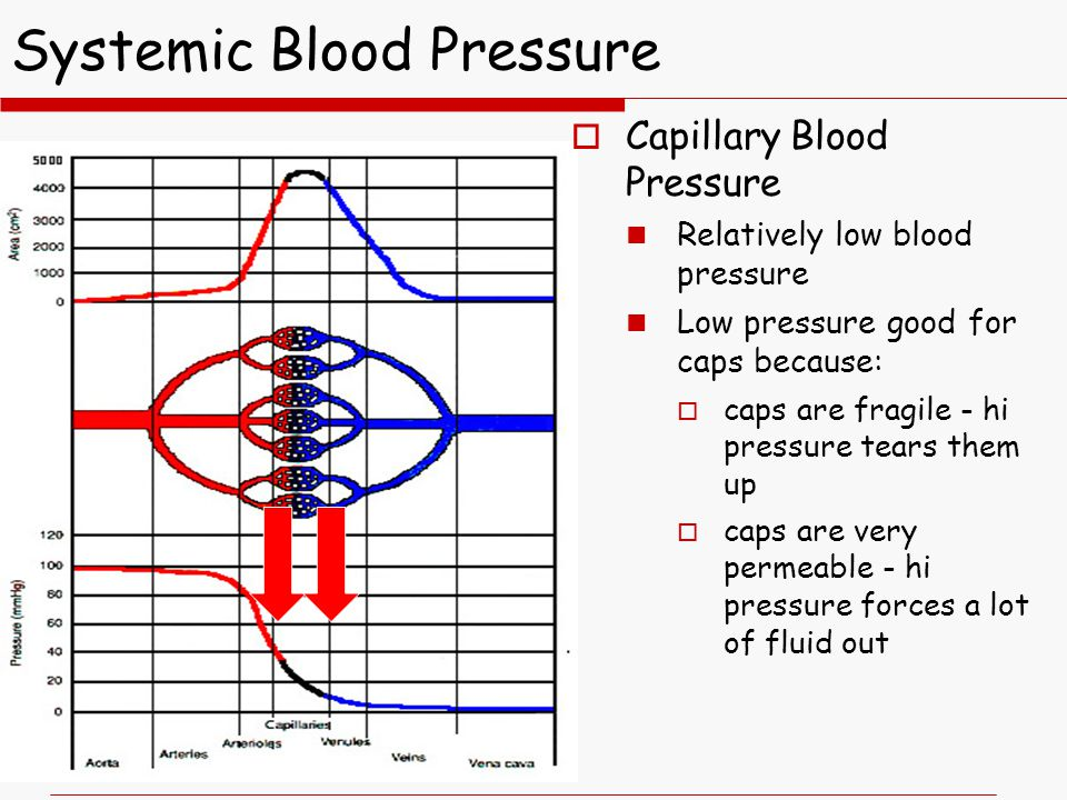 Systemic Blood Pressure  Capillary Blood Pressure Relatively low blood pressure Low pressure good for caps because:  caps are fragile - hi pressure tears them up  caps are very permeable - hi pressure forces a lot of fluid out