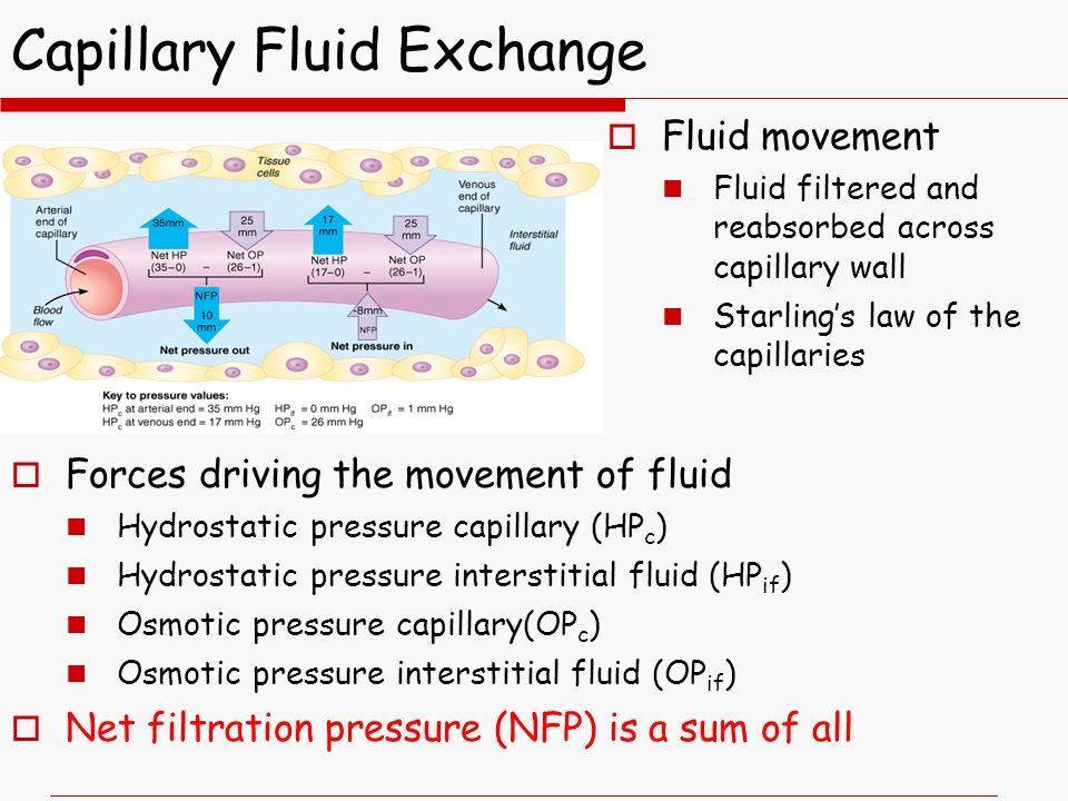 Capillary Fluid Exchange  Forces driving the movement of fluid Hydrostatic pressure capillary (HP c ) Hydrostatic pressure interstitial fluid (HP if ) Osmotic pressure capillary(OP c ) Osmotic pressure interstitial fluid (OP if )  Net filtration pressure (NFP) is a sum of all  Fluid movement Fluid filtered and reabsorbed across capillary wall Starling's law of the capillaries