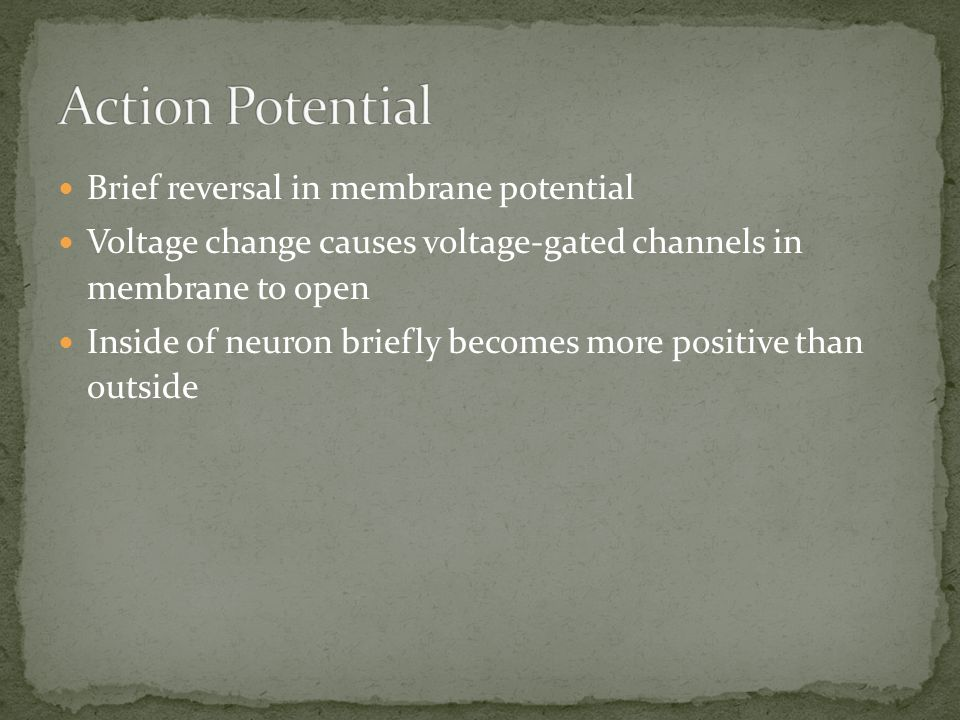 Brief reversal in membrane potential Voltage change causes voltage-gated channels in membrane to open Inside of neuron briefly becomes more positive t