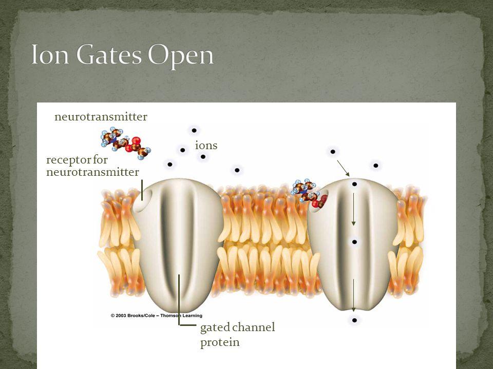 ions neurotransmitter receptor for neurotransmitter gated channel protein