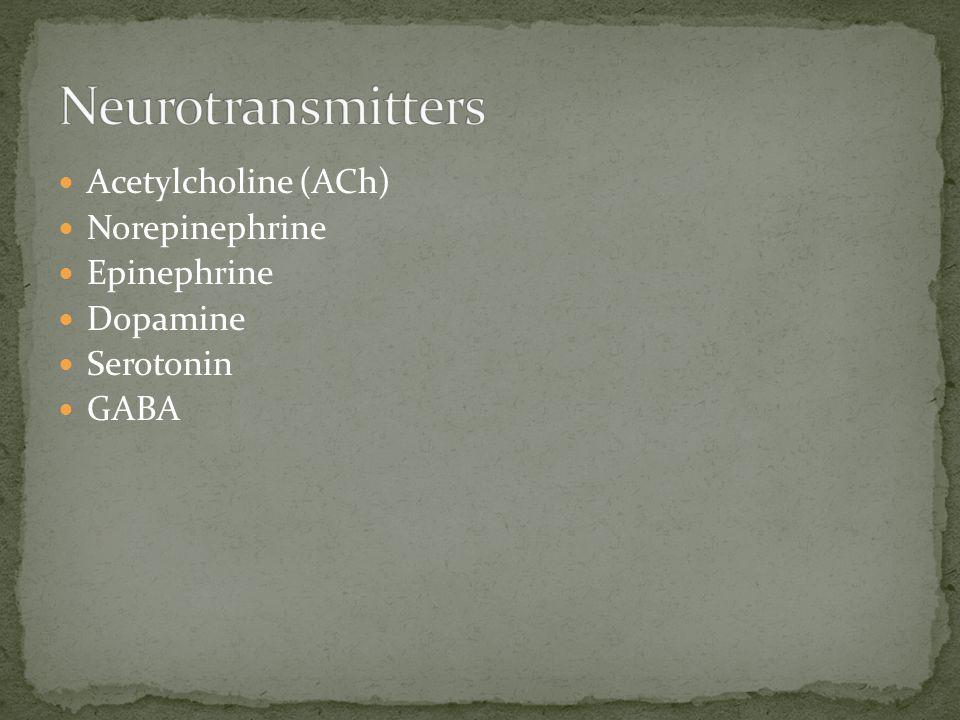Acetylcholine (ACh) Norepinephrine Epinephrine Dopamine Serotonin GABA