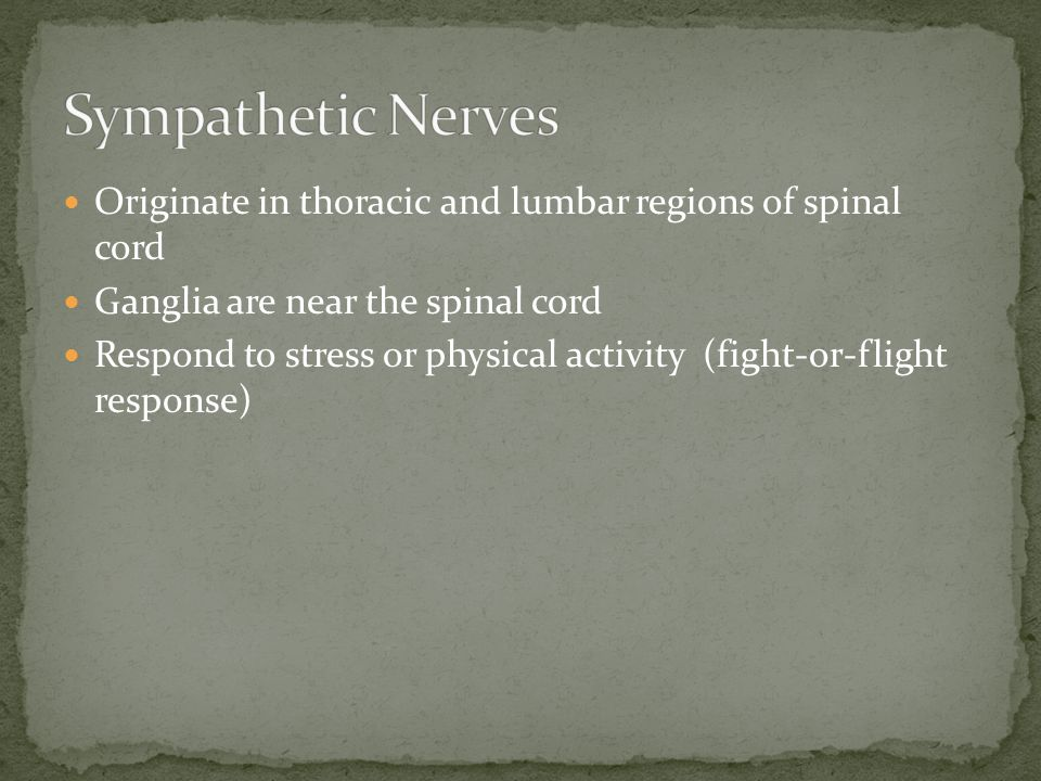 Originate in thoracic and lumbar regions of spinal cord Ganglia are near the spinal cord Respond to stress or physical activity (fight-or-flight respo