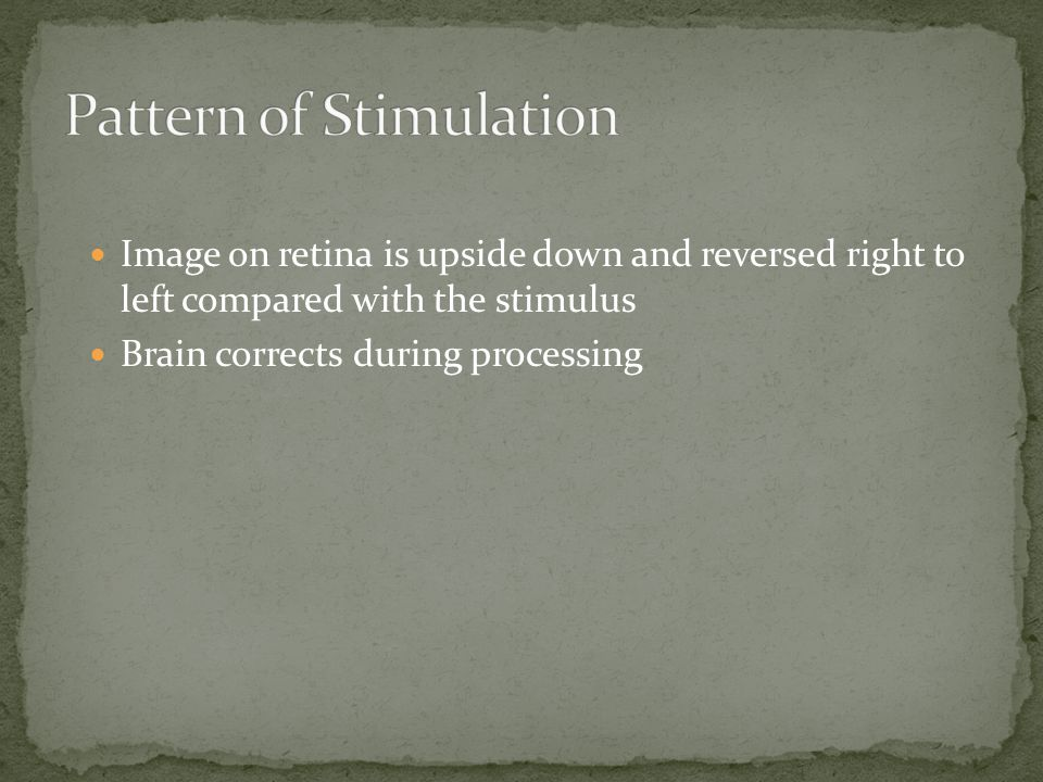 Image on retina is upside down and reversed right to left compared with the stimulus Brain corrects during processing