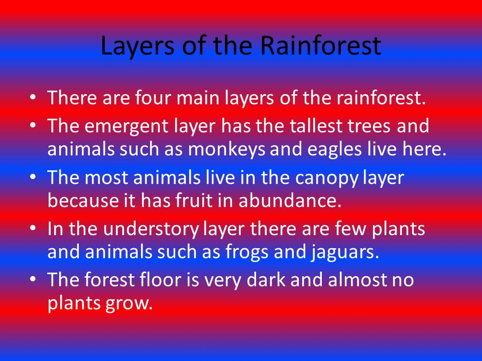 Layers of the Rainforest There are four main layers of the rainforest. The emergent layer has the tallest trees and animals such as monkeys and eagles