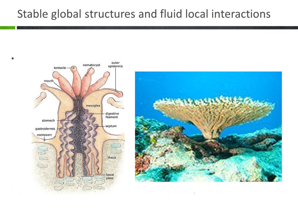 Stable global structures and fluid local interactions